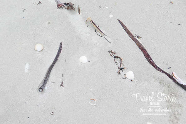 Muscheln auf feinem weißem Sand ©Sabine Mey-Gordeyns