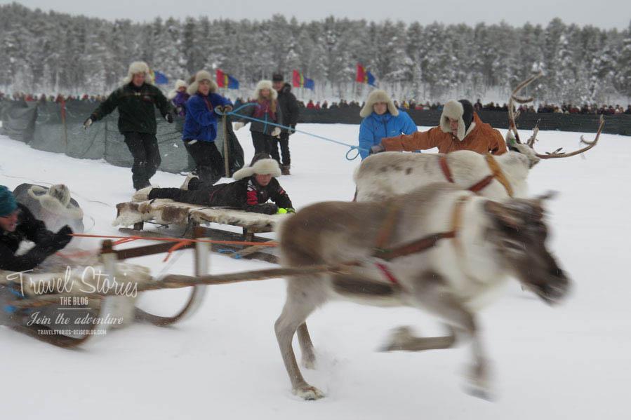 Spaß für die Zuschauer: Rentierrennen in Jokkmokk ©Sabine Mey-Gordeyns