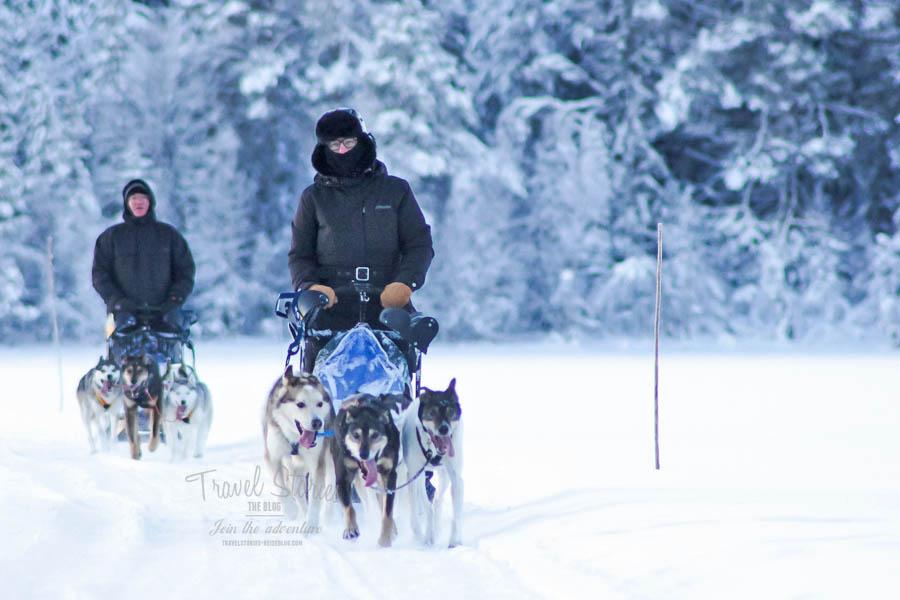 Mushing: Ein Traum wird wahr! Foto mit freundlicher Genehmigung von spuren-im-schnee.de