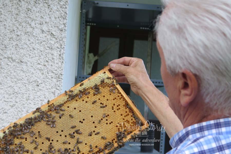 Bienenwabe mit Carnica Bienen ©Sabine Mey-Gordeyns, travelstories-reiseblog.com