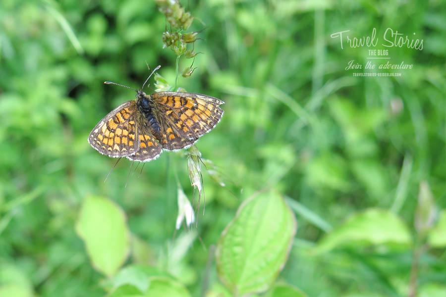 Ein Schmetterling! ©Sabine Mey-Gordeyns, travelstories-reiseblog.com
