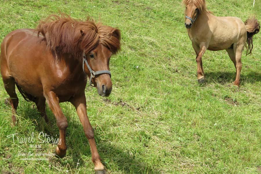 Pferde, spielerisch © Sabine Mey-Gordeyns, travelstories-reiseblog.com