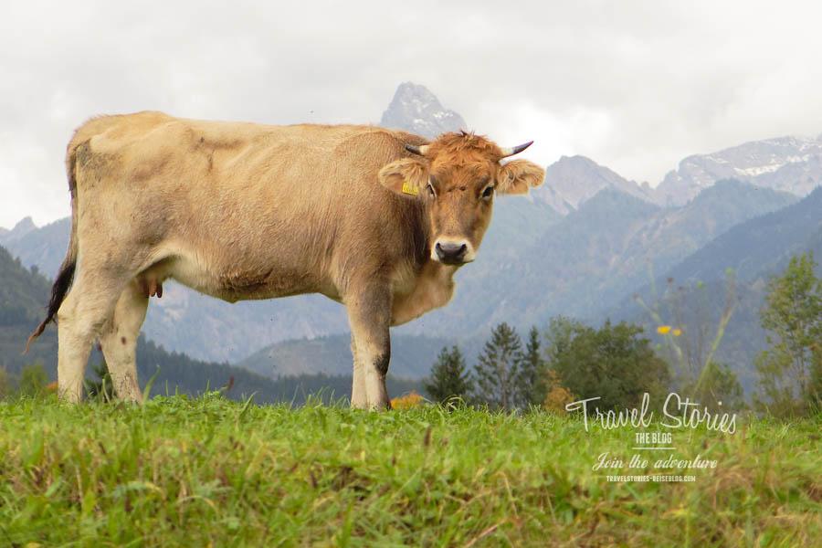 Hier ist die Welt der glücklichen Kühe - Styria Beef © Sabine Mey-Gordeyns, travelstories-reiseblog.com